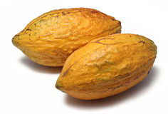 Cacao pods stock images