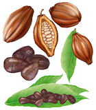 Cacao pods and grains Stock Photo
