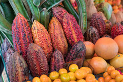 Cacao Pods used to make Chocolate. At a market in Lima Peru, Cacao (Cocoa) Pods are for sale. These pods contain the seeds used to make chocolate stock image