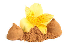 Cacao powder and  chocolate sweets with flower of alstroemeria Stock Photos