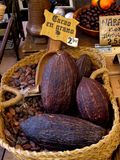 Cacao seed. On a basket, chocolate market Stock Images