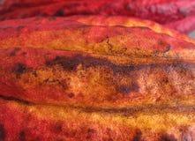 Cacao strąk Obrazy Royalty Free