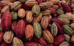 Cacao strąki zdjęcie stock