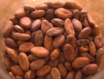 Cacaobonen Royalty-vrije Stock Afbeelding