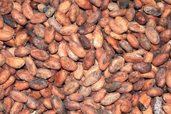 Cacaobonen Royalty-vrije Stock Foto's