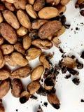 Cacaobonen en bonen royalty-vrije stock foto