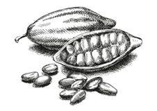 Cacaobonenillustratie versie stock illustratie