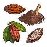 Cacaofruit, bonen en poeder, reeks stijl vectorillustraties royalty-vrije illustratie