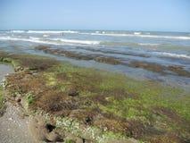 Cacaostrand Coral Reef Royalty-vrije Stock Fotografie