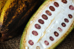 Cacaovruchten Stock Foto's