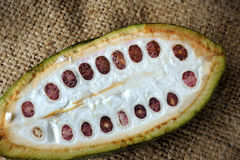 Cacaovruchten Stock Foto