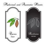 Cacaovruchten en bladeren Stock Afbeeldingen
