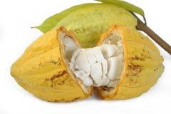 Cacaovruchten met blad stock afbeelding