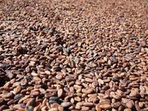 Cacaozaden Stock Afbeeldingen