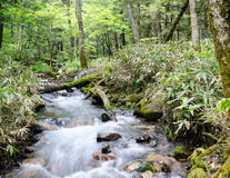 Cacasde fall with moss rocks at Kamigogi national park, Japan Royalty Free Stock Image