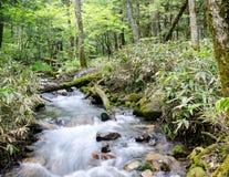 Cacasde fall with moss rocks at Kamigogi national park, Japan. Cascade fall with mossy rocks Royalty Free Stock Image