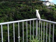 Cacatúa con cresta amarilla que presenta en un carril del balcón Imagenes de archivo