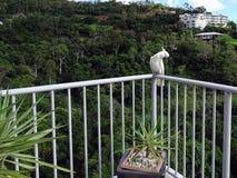Cacatúa con cresta amarilla que presenta en un carril del balcón Imágenes de archivo libres de regalías