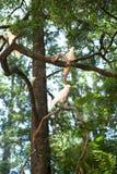 Cacatúas blancas que se sientan en un árbol Imágenes de archivo libres de regalías
