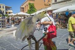 Cacatoès et perroquet dans la vieille ville de Rhodes Images stock