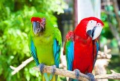 Cacatua de dois papagaios Fotos de Stock Royalty Free