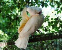 Cacatua parrot Oasi Sant'Alessio Pavia Stock Images