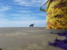 Cacauen för hundförälskelsecachorro synar fêmeadjurdjur Arkivbild