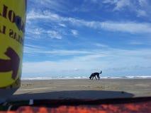 Cacauen för hundförälskelsecachorro synar fêmeadjurdjur Royaltyfri Foto