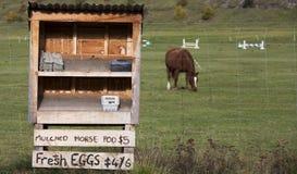 Cacca ed uova del cavallo da vendere Fotografie Stock Libere da Diritti