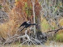 caccia agli'uccelli nella palude Fotografia Stock Libera da Diritti