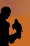Caccia col falcone Immagini Stock