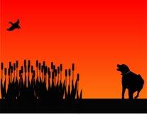 Caccia del cane di uccello alla siluetta di tramonto Fotografia Stock Libera da Diritti