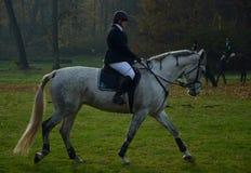 Caccia del cavallo in repubblica Ceca Fotografie Stock