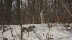 Caccia del dado di Grey Squirrel Immagini Stock Libere da Diritti