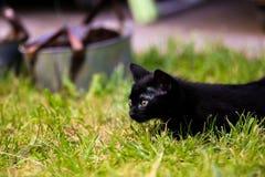 Caccia del gattino nel giardino Fotografia Stock