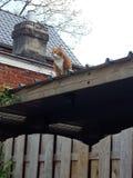 Caccia del gatto Immagine Stock