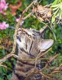 Caccia del gatto nel giardino Fotografia Stock Libera da Diritti