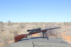 Caccia di Kalahari Fotografia Stock