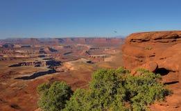 Caccia di primo mattino in Canyonlands fotografie stock