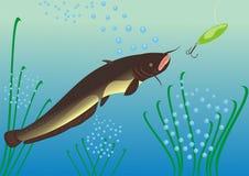 Cacciando per un pesce gatto Immagine Stock Libera da Diritti