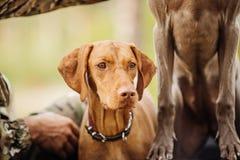 Cacciatore con un cane sulla foresta immagini stock libere da diritti