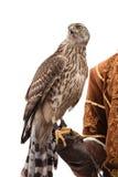 Cacciatore del falco isolato su bianco Immagini Stock Libere da Diritti