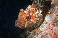 Cacciatore subacqueo di notte fotografie stock libere da diritti