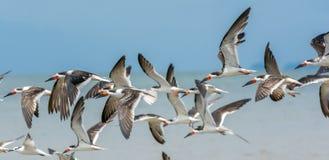 Cacciatori di volo fotografie stock