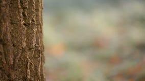 cacerola de hojas y del tronco de árbol helados metrajes