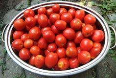 Cacerola de los tomates de Roma Imagen de archivo