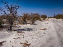 Cacerola en el parque nacional de Savuti en Botswana, África Foto de archivo libre de regalías