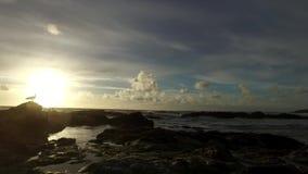 Cacerola lenta de la marea que sale con ondas apacibles que traslapan en rocas y rockpools de relleno y una gaviota que mira el s metrajes