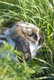 Caché dans l'herbe Photos libres de droits