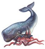 Cachalot e calamaro Fotografia Stock